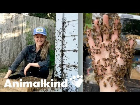 Beekeeper rescues bees with her bare hands | Animalkind